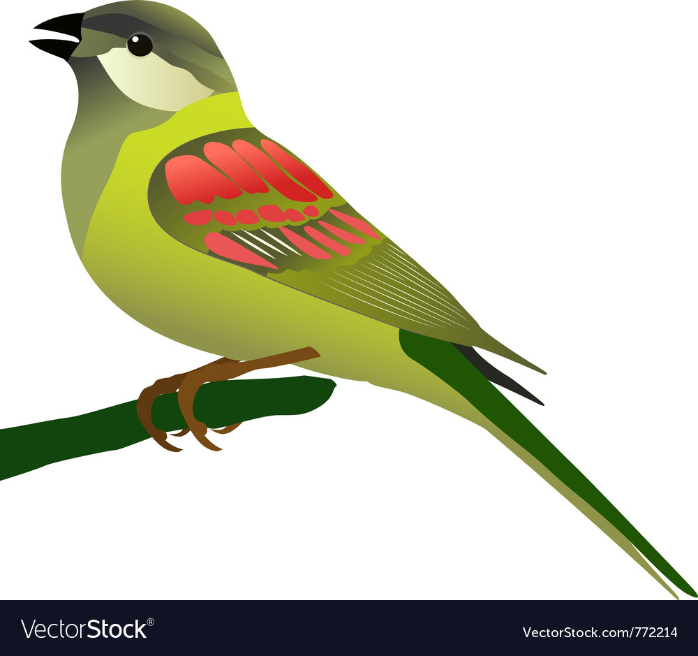 Little bird perched on twig vector | Price: 1 Credit (USD $1)