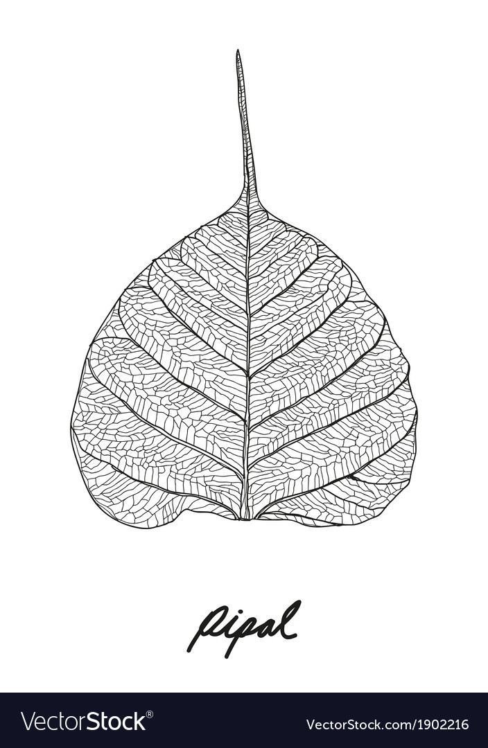 Pipal leaf vector | Price: 1 Credit (USD $1)