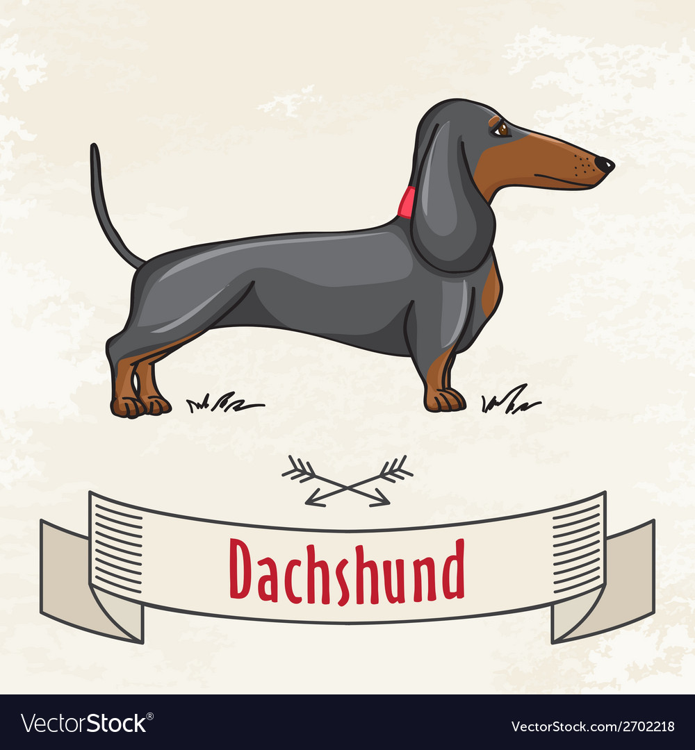 Dachshund vector | Price: 1 Credit (USD $1)