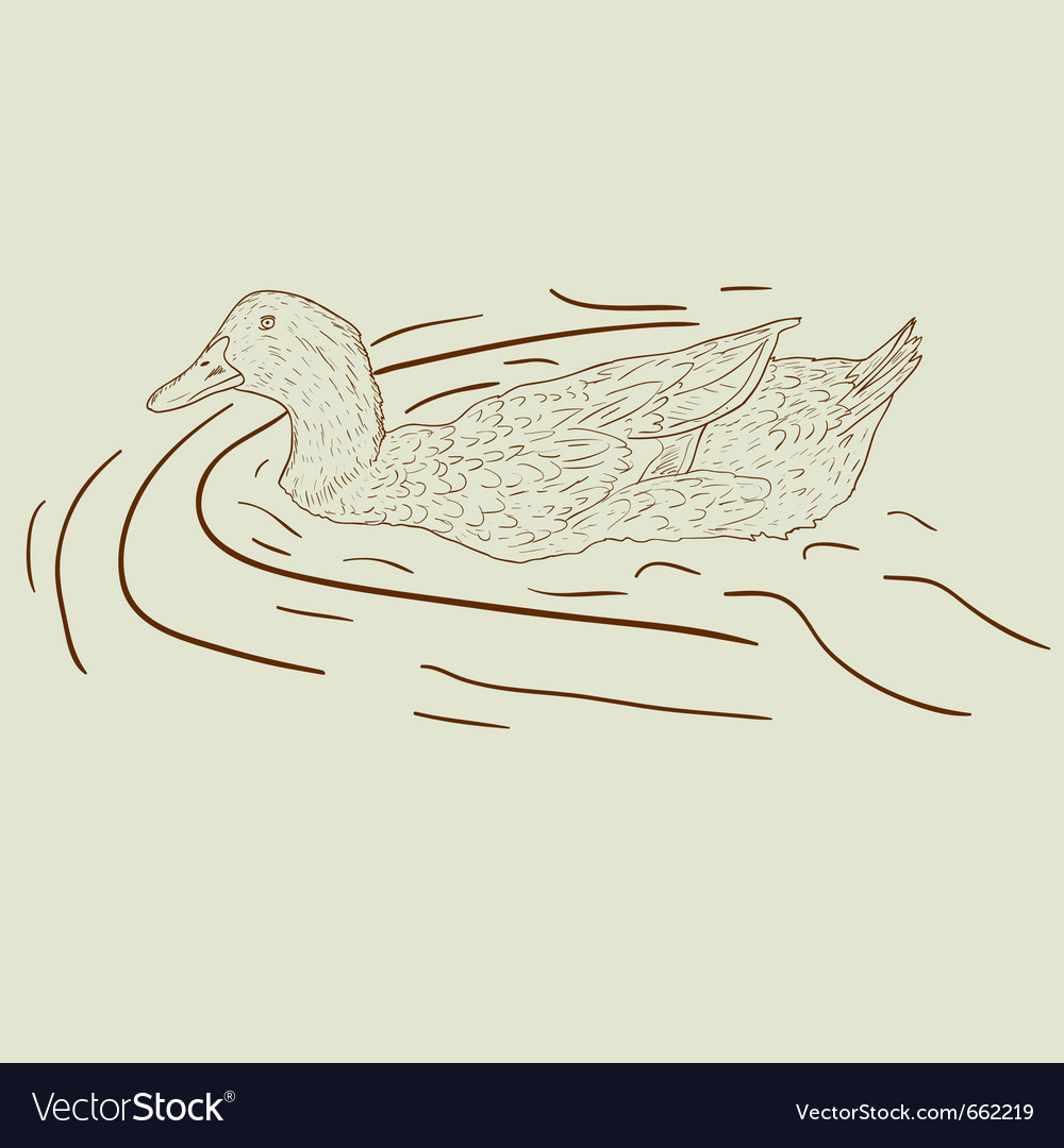 Wild duck hand-painted vector | Price: 1 Credit (USD $1)