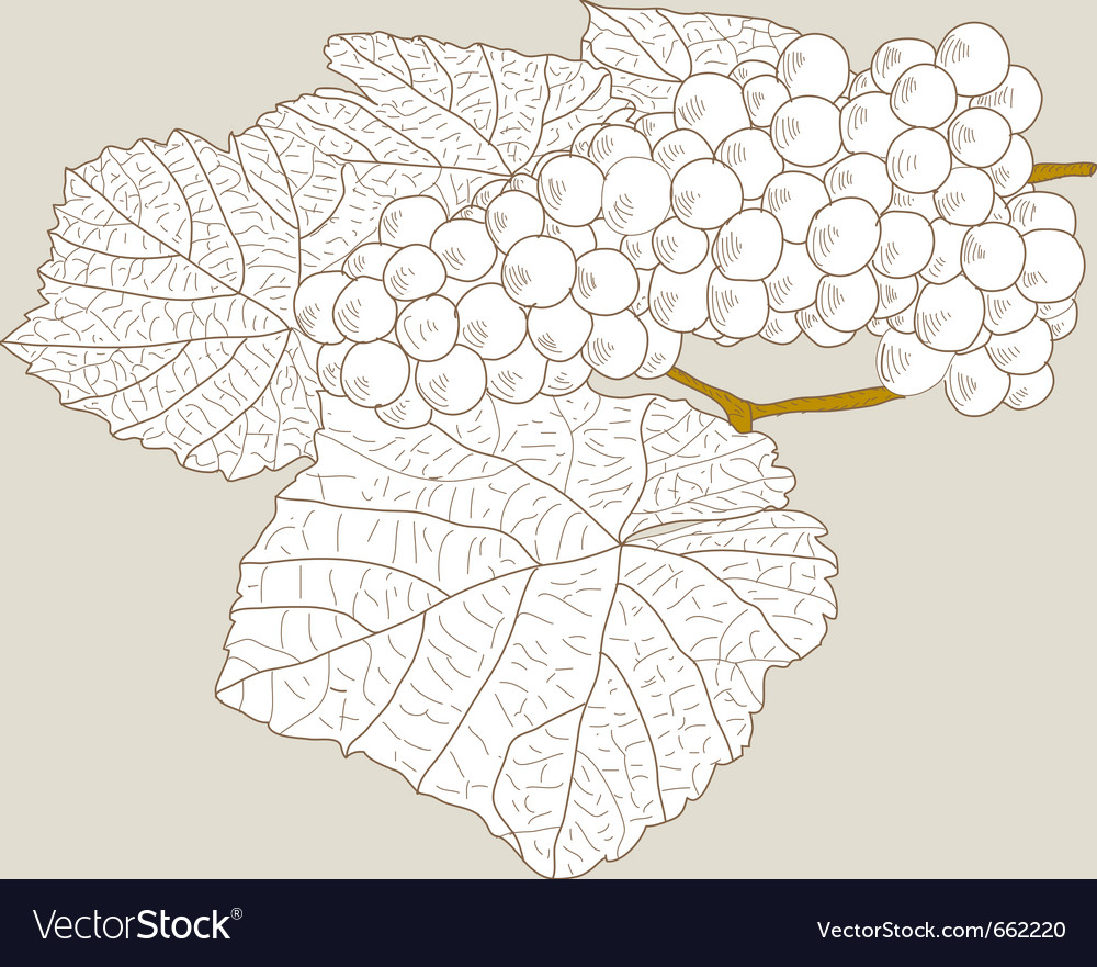 Abstract grape with leafs vector   Price: 1 Credit (USD $1)