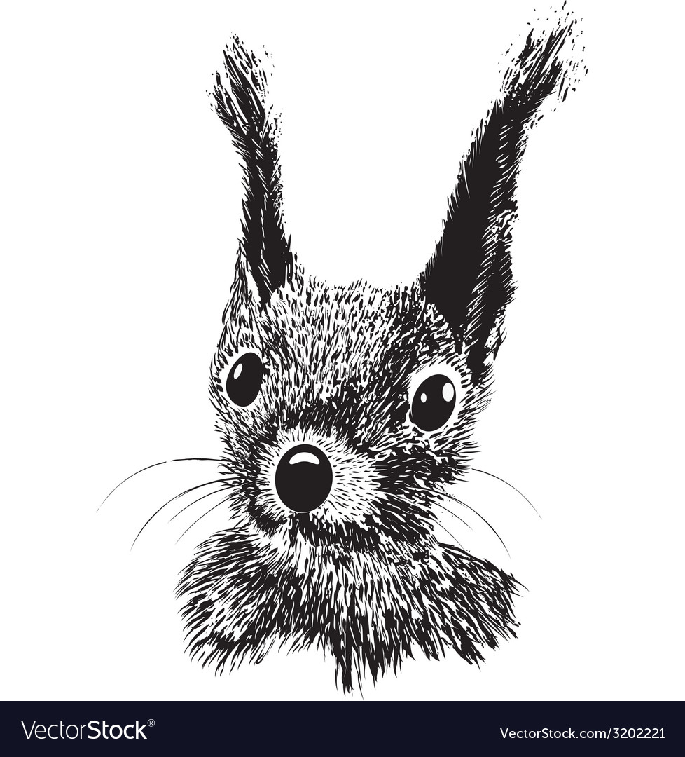 Squirrel head animal for t-shirt vector | Price: 1 Credit (USD $1)