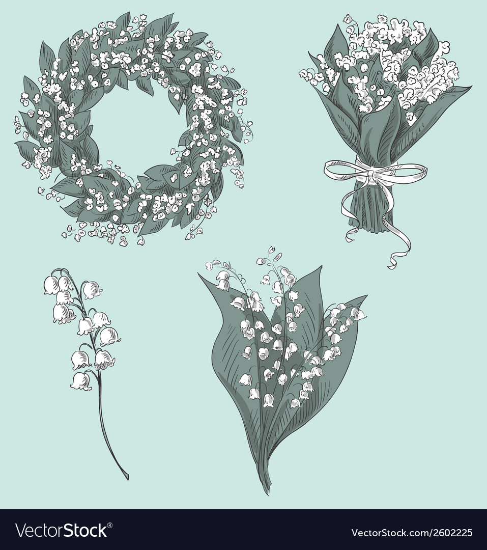 Set of lily of the valley drawings vector | Price: 1 Credit (USD $1)