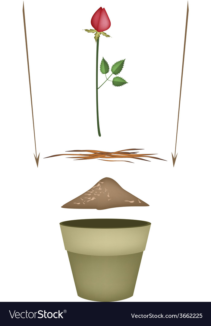 Terracotta flower pots with soil and red rose vector | Price: 1 Credit (USD $1)