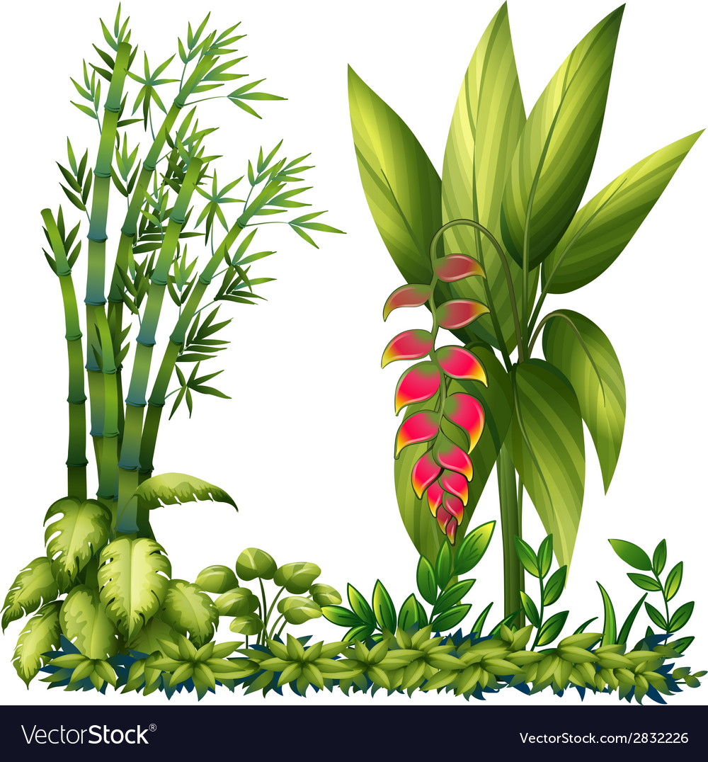 Ornamental plants vector | Price: 1 Credit (USD $1)