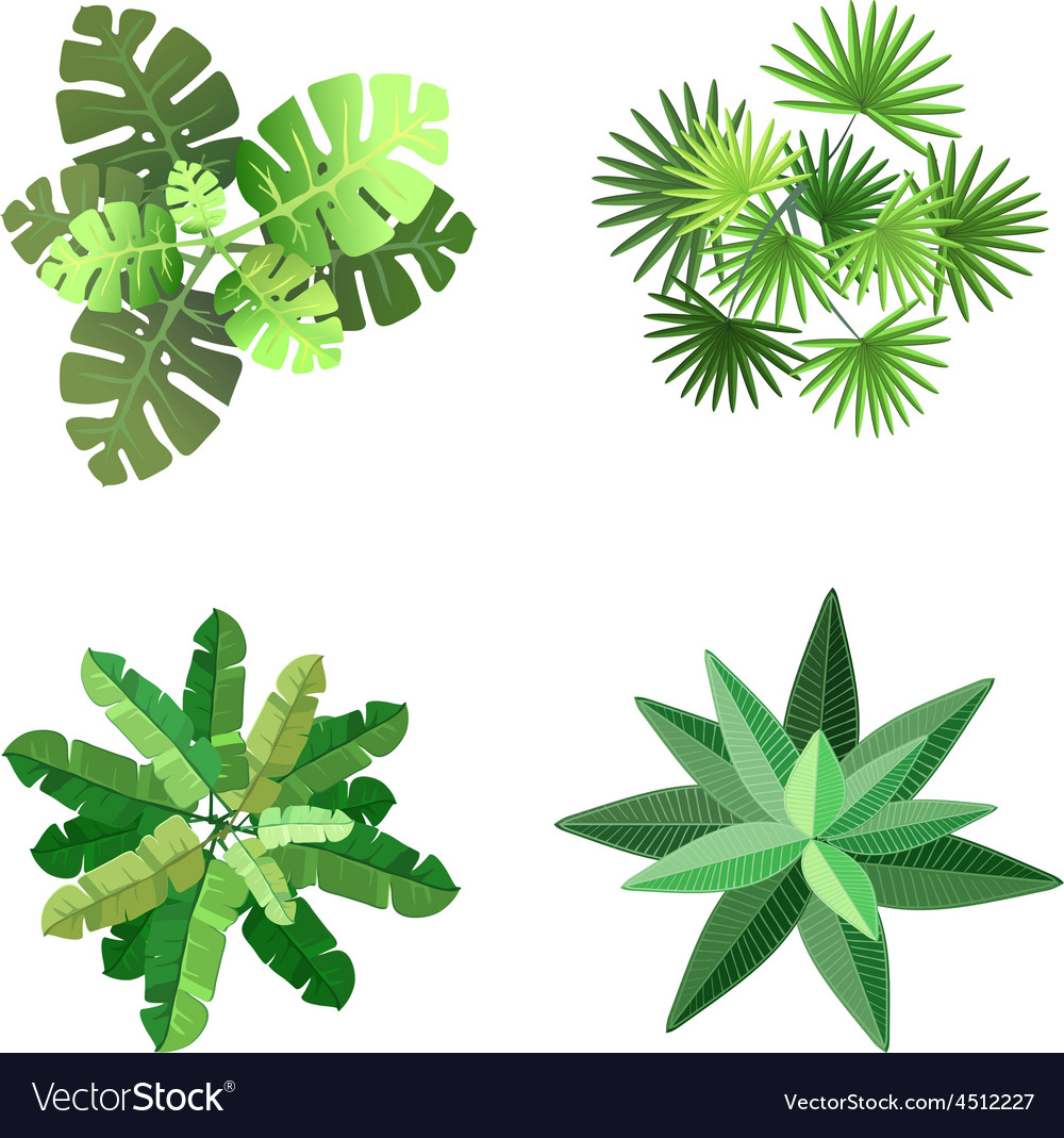 Trees top view for landscape vector