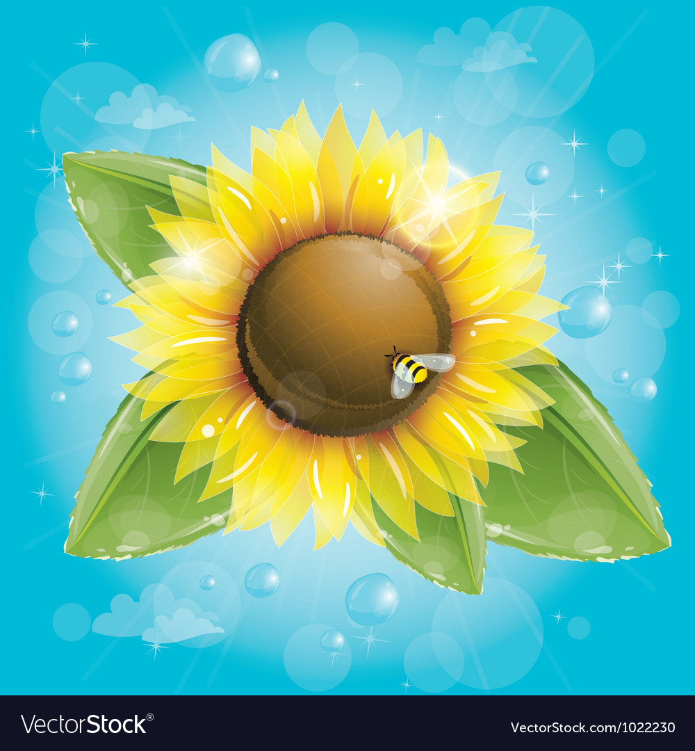 Beautiful sunflower and green leaves against blue vector | Price: 3 Credit (USD $3)