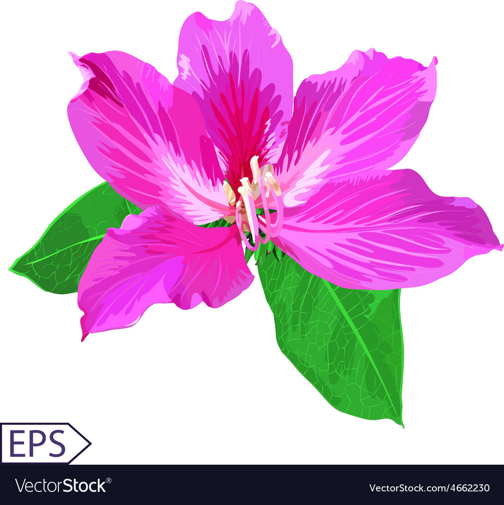 Painted flowers of seamless background vector   Price: 1 Credit (USD $1)