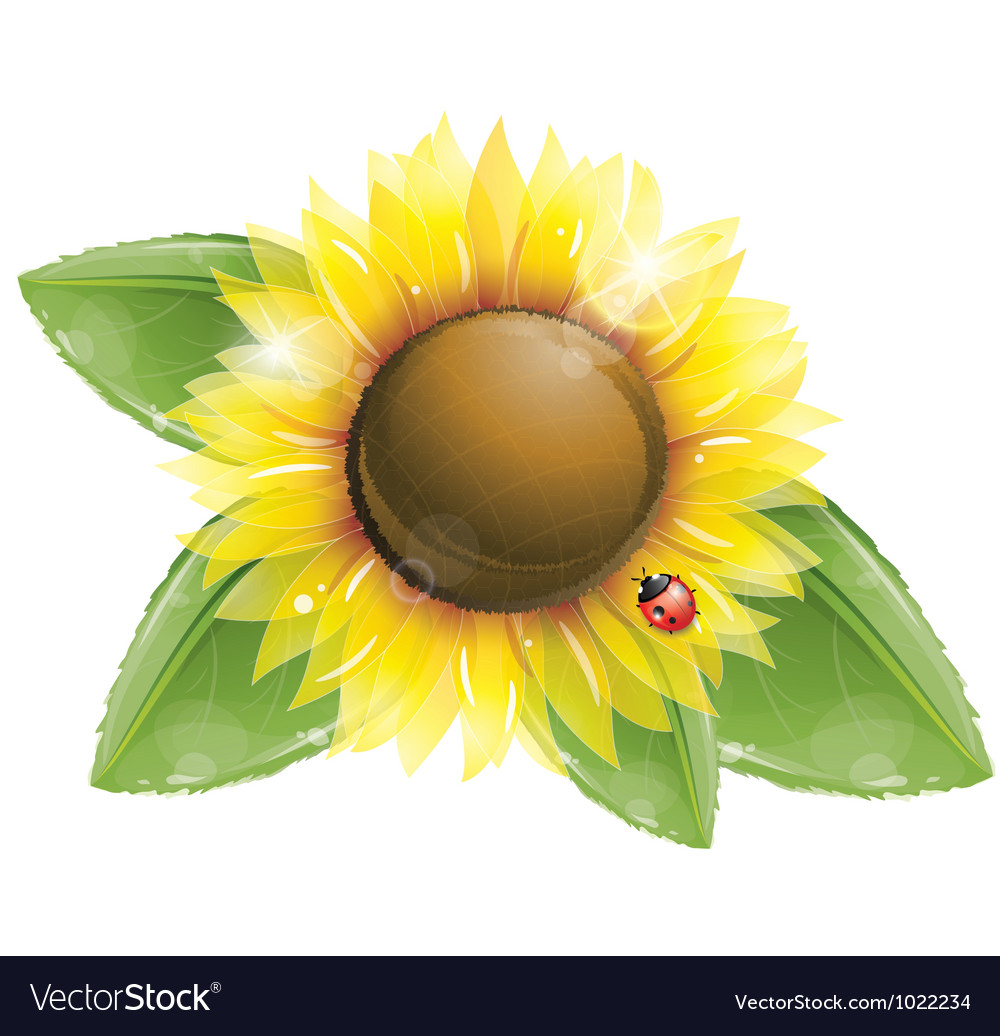 Beautiful sunflower and green leaves isolated vector | Price: 3 Credit (USD $3)