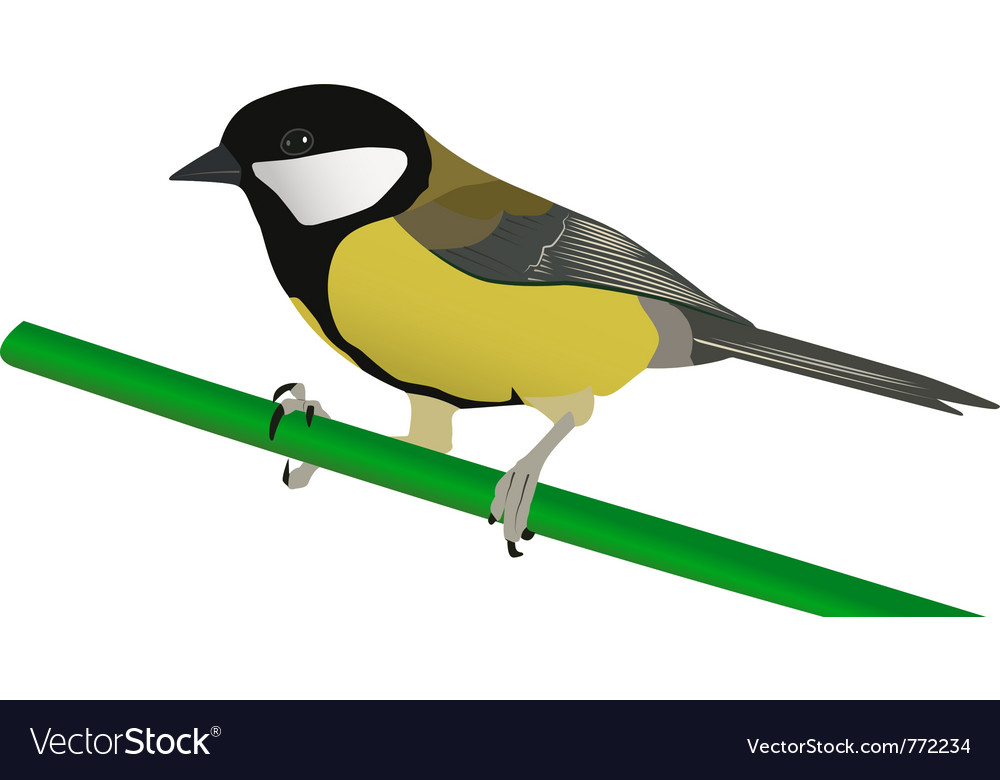 Little tit perched on twig vector | Price: 1 Credit (USD $1)