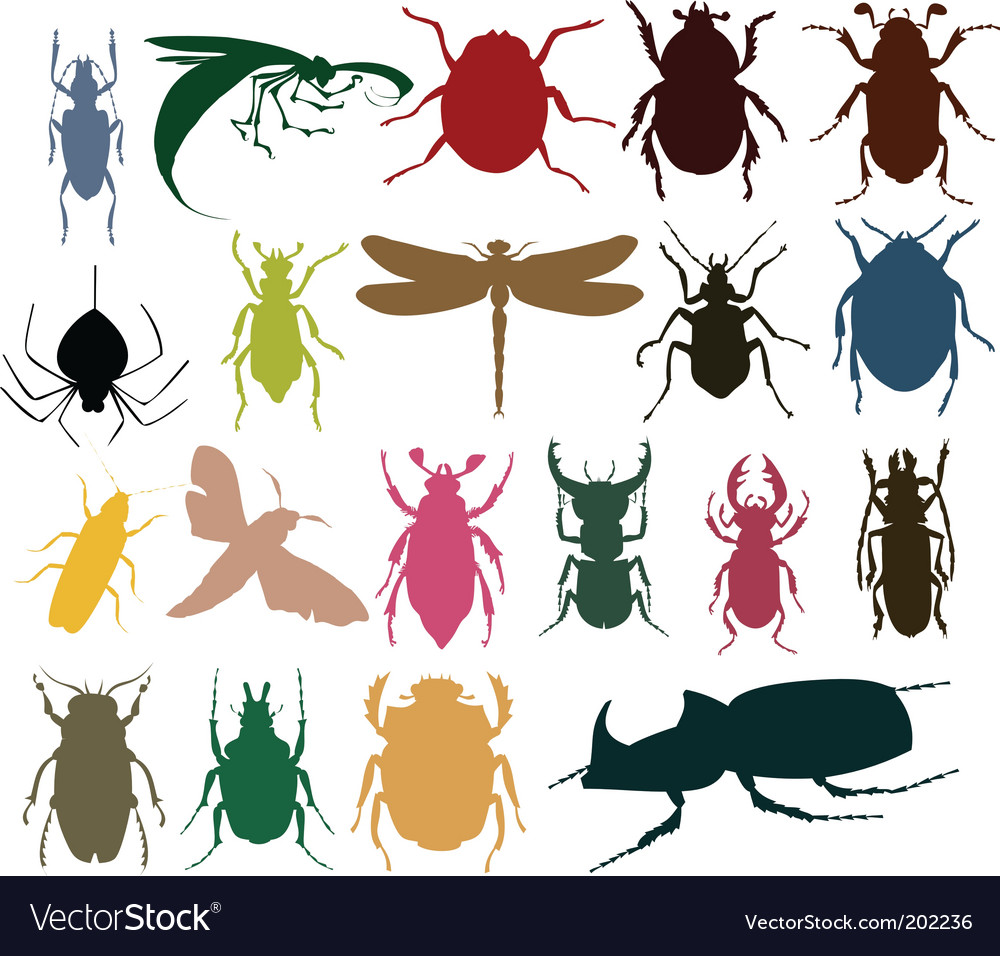 Insect icon vector | Price: 1 Credit (USD $1)