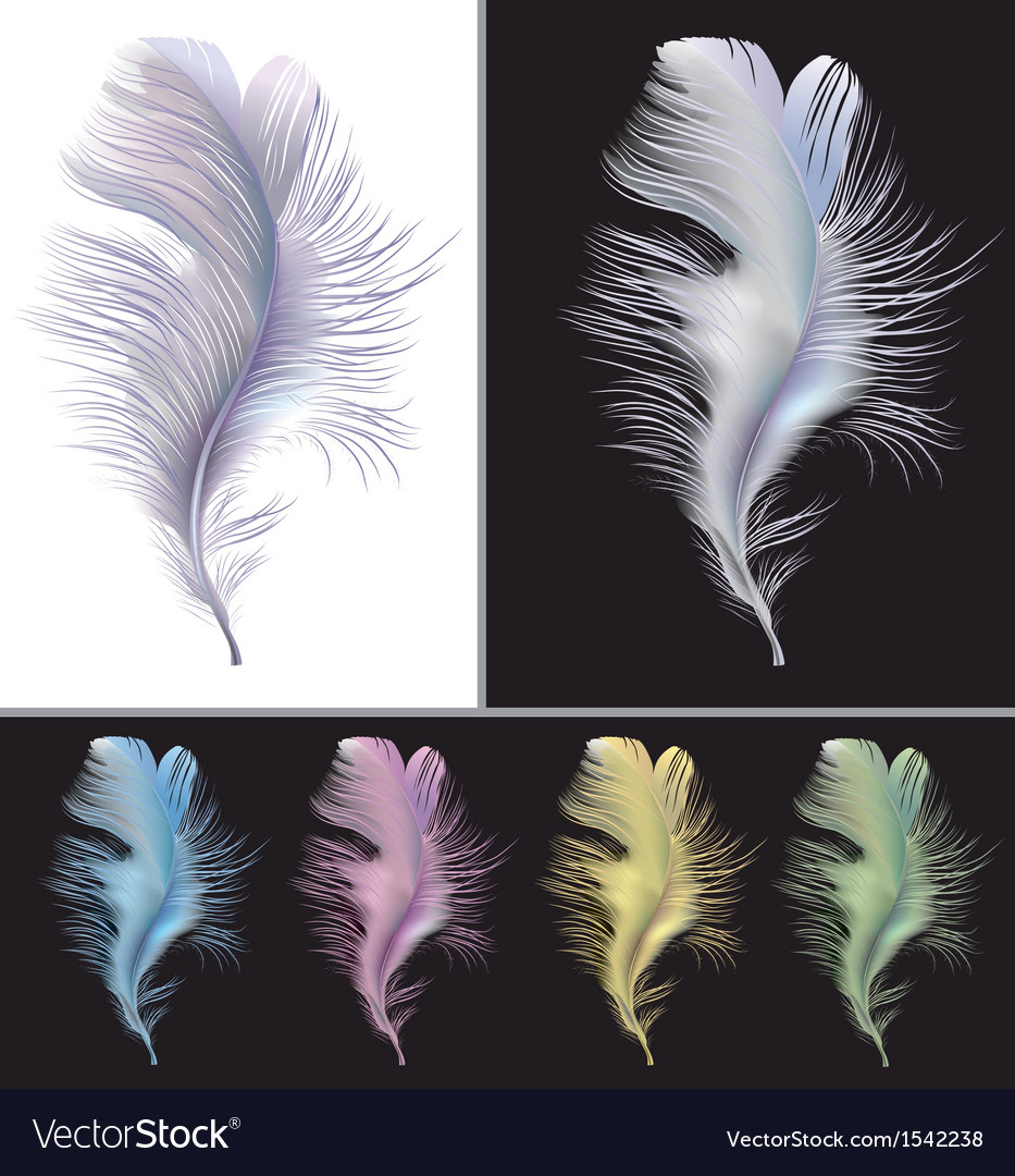 Tender air feather vector | Price: 1 Credit (USD $1)