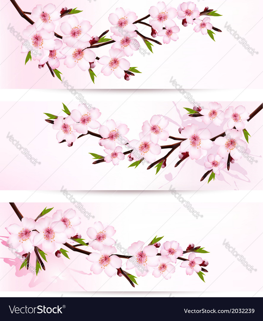 Three sakura branch banners vector | Price: 1 Credit (USD $1)