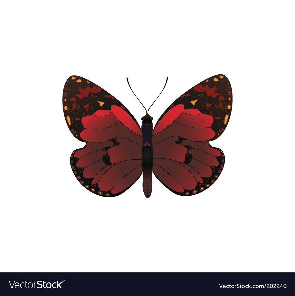 Red butterfly vector | Price: 1 Credit (USD $1)