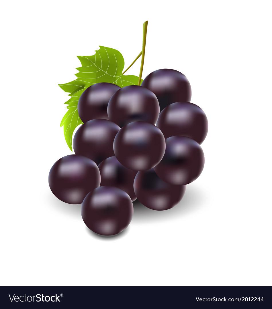 Grape vector | Price: 1 Credit (USD $1)