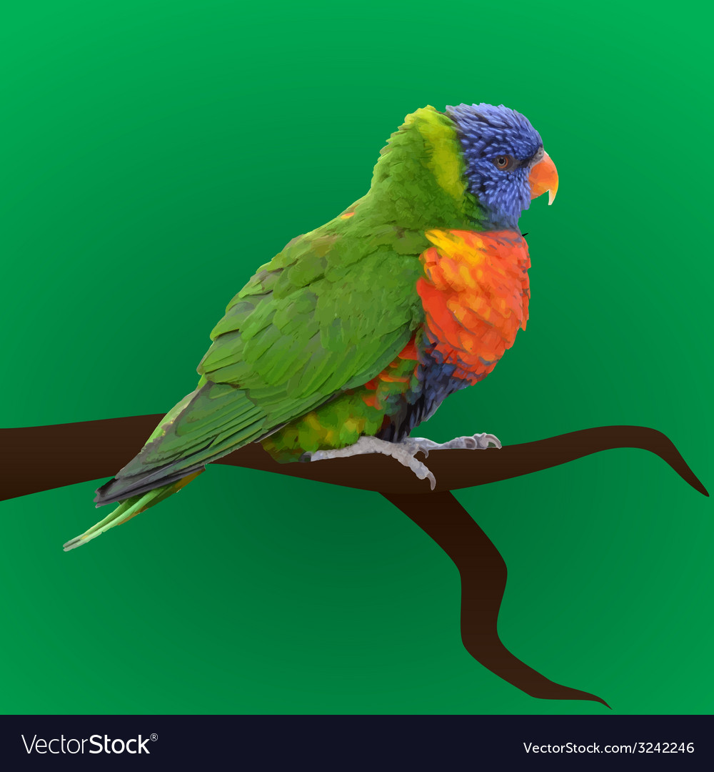 Colorful parrot sitting eps10 vector | Price: 1 Credit (USD $1)