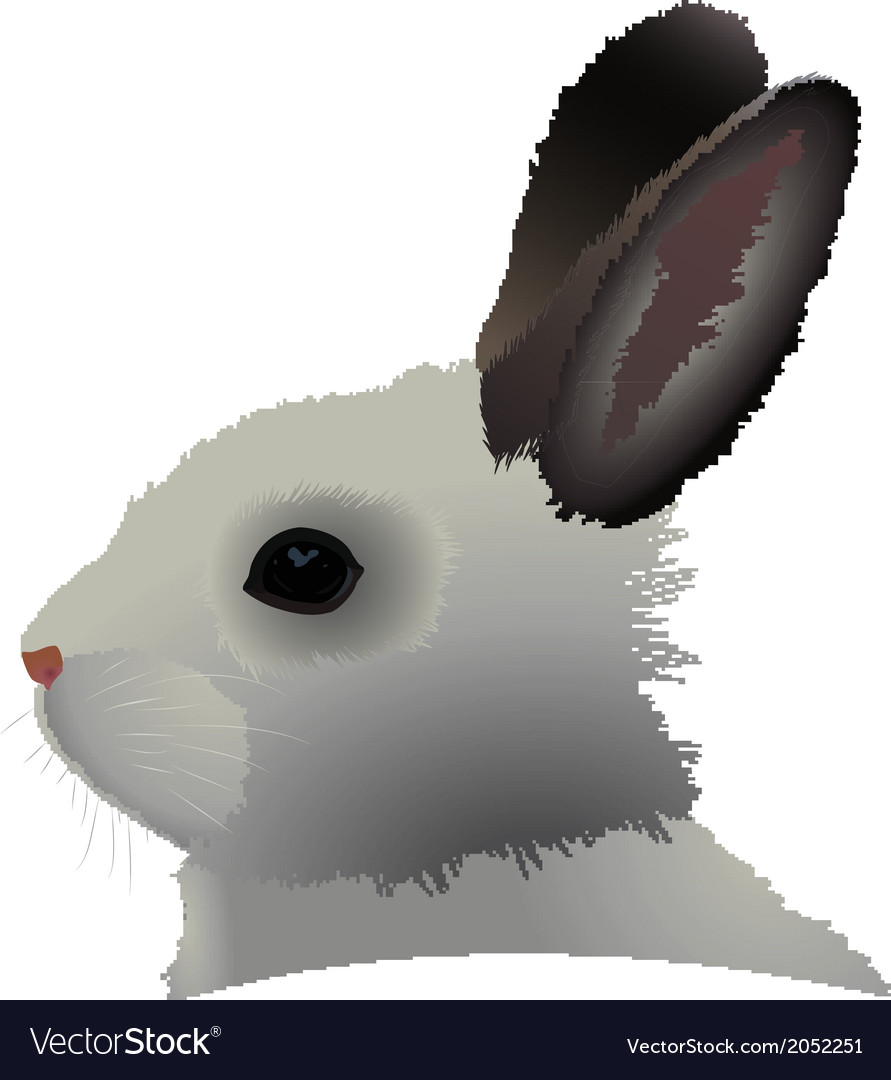 Rabbit head vector | Price: 1 Credit (USD $1)