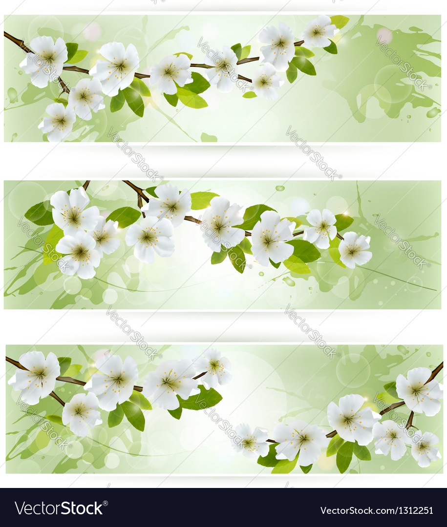 Three nature banners with blossoming tree branches vector | Price: 1 Credit (USD $1)