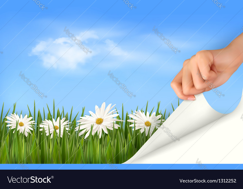 Nature background with green grass daisies and vector | Price: 1 Credit (USD $1)