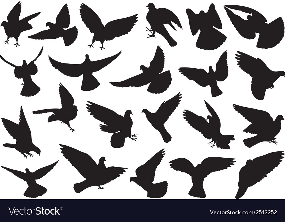 Set of different doves vector | Price: 1 Credit (USD $1)