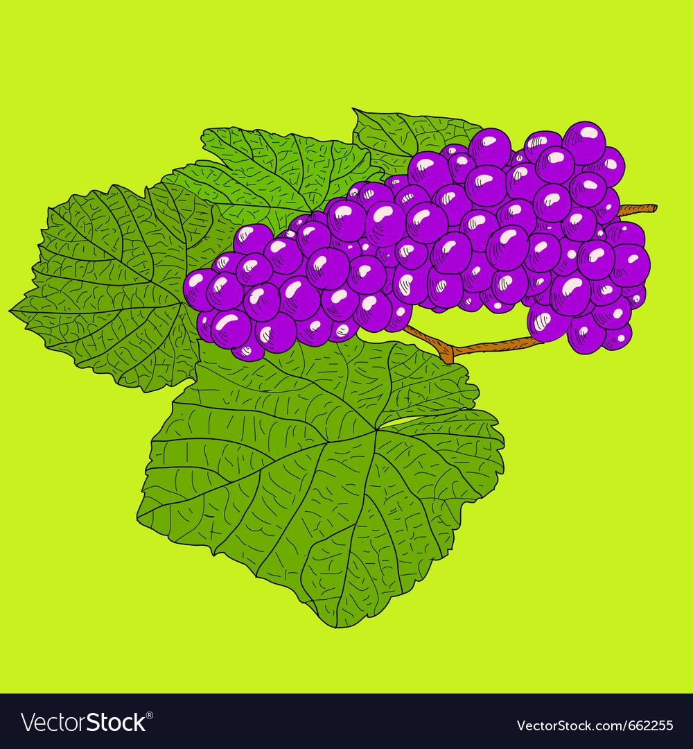 Abstract grape with leafs vector | Price: 1 Credit (USD $1)