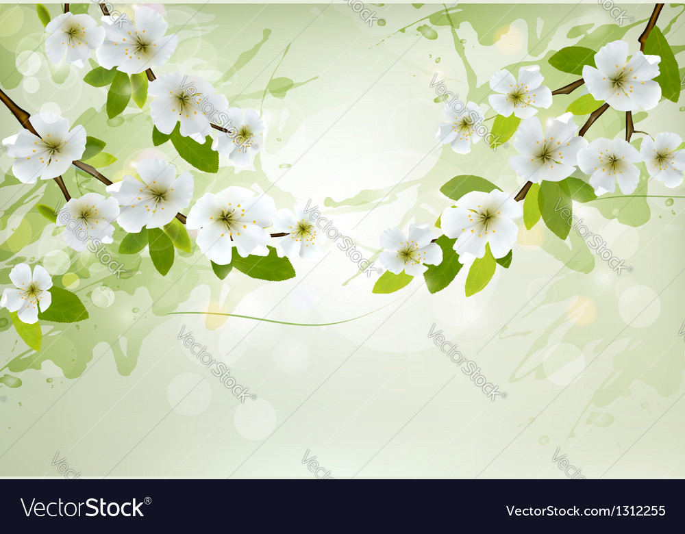 Nature background with white blossoming branches vector | Price: 1 Credit (USD $1)