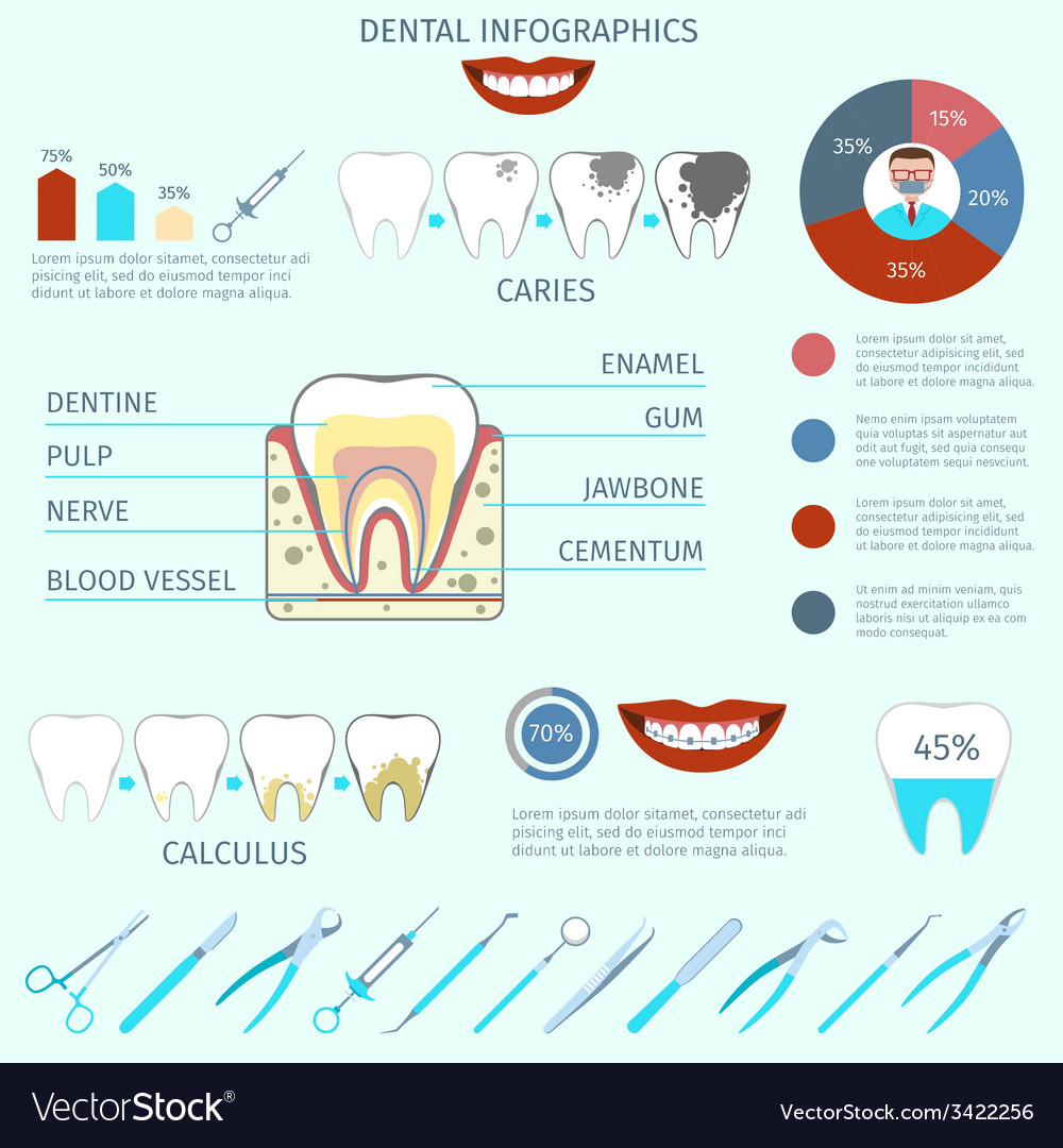 Dental infographics set vector | Price: 1 Credit (USD $1)