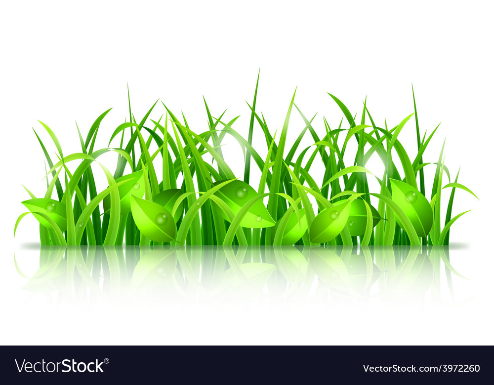 Green grass and leaves vector | Price: 1 Credit (USD $1)