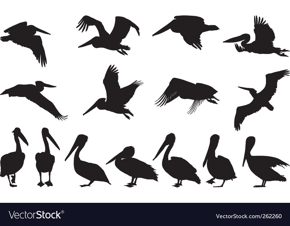 Pelican silhouettes vector | Price: 1 Credit (USD $1)