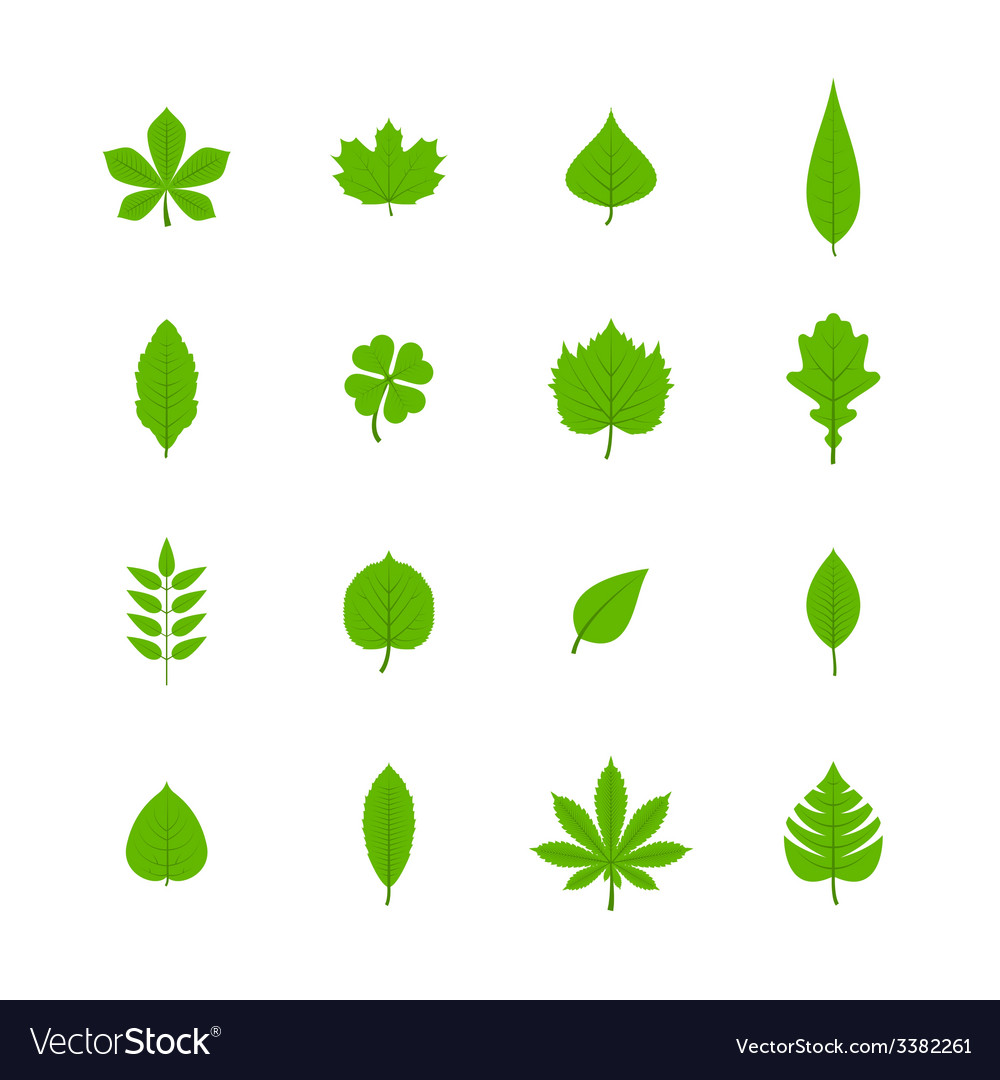 Green leaves flat icons set vector | Price: 1 Credit (USD $1)