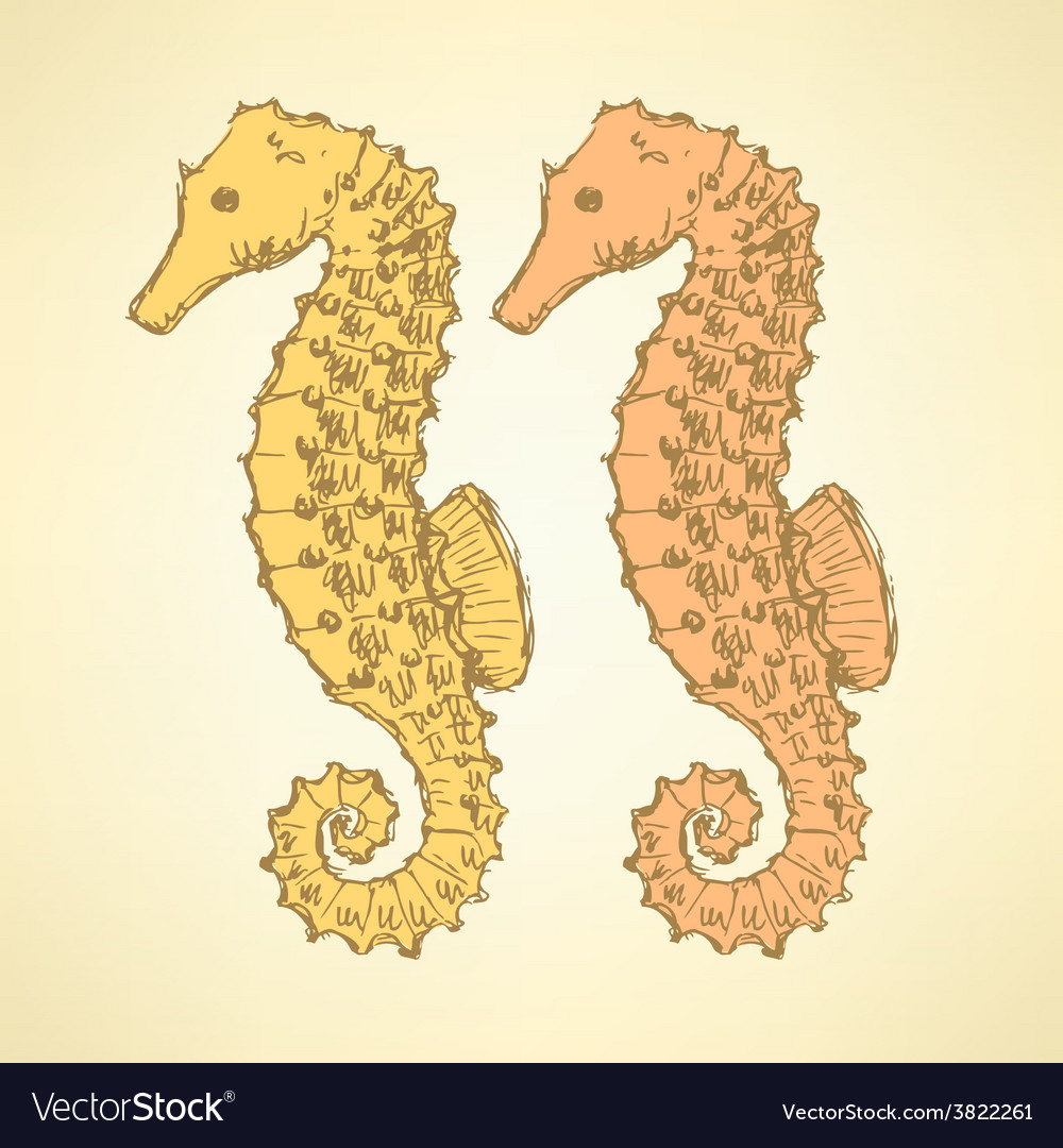 Sketch cute seahorse in vintage style vector | Price: 1 Credit (USD $1)
