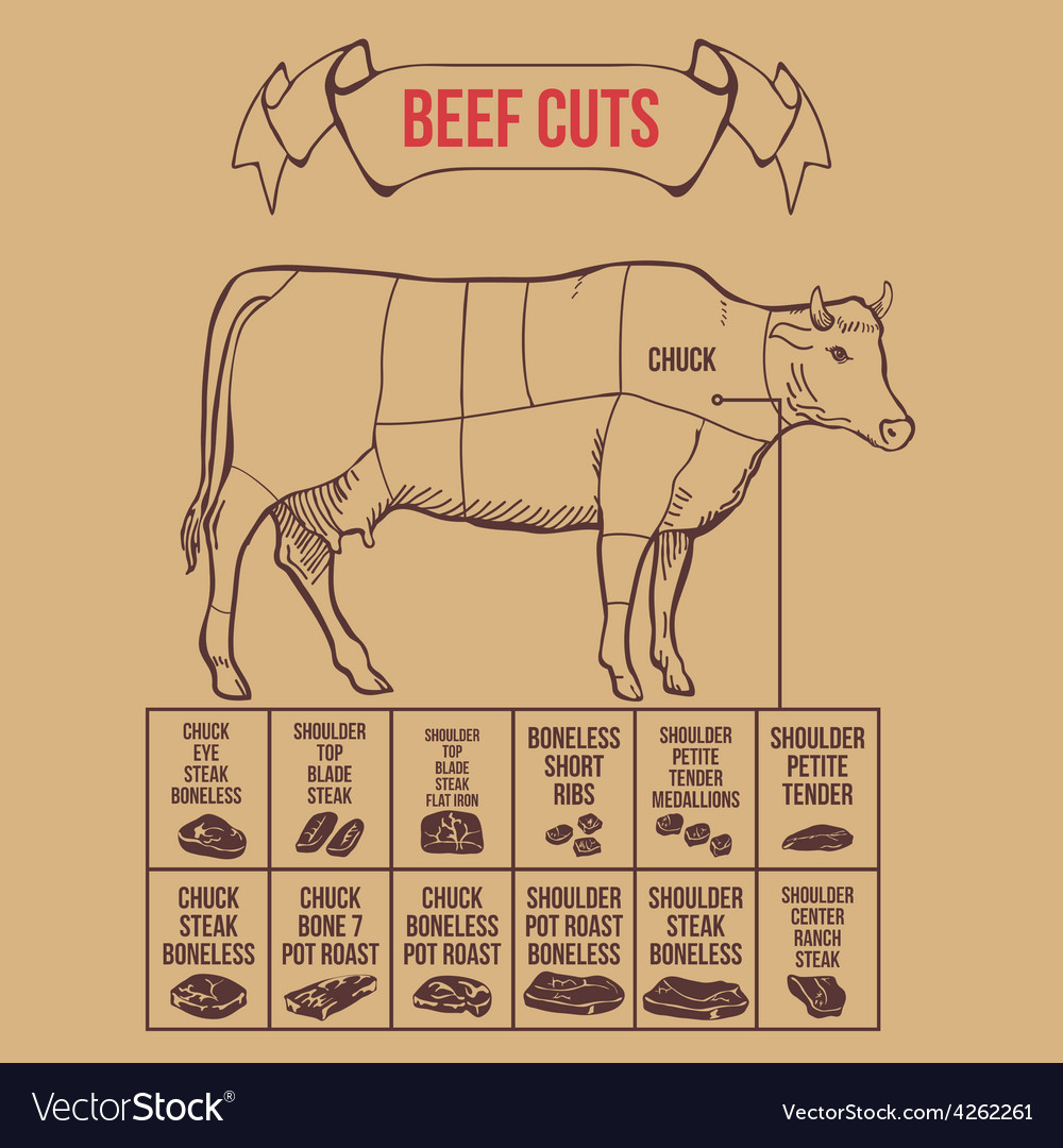 Vintage butcher cuts of beef scheme vector | Price: 1 Credit (USD $1)