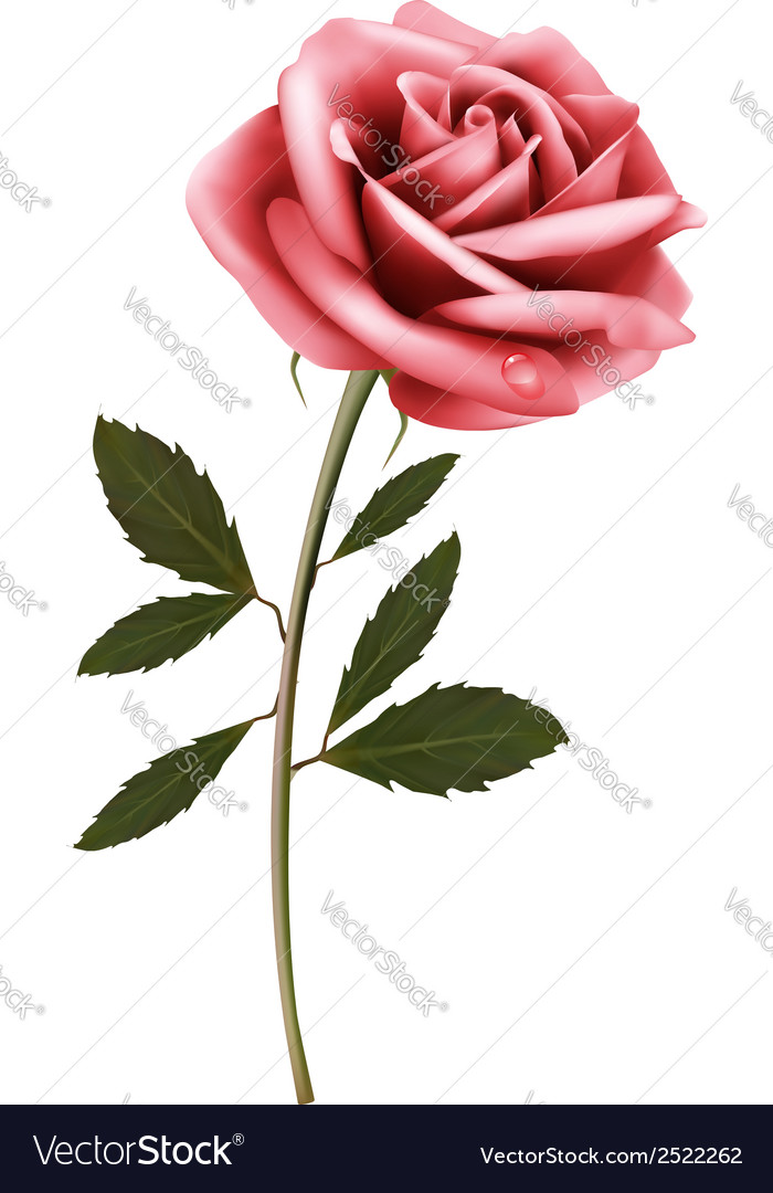 Flower background with a pink rose vector | Price: 1 Credit (USD $1)