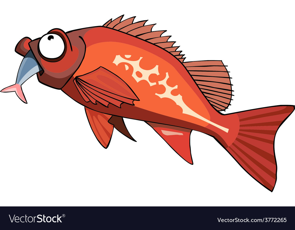 Cartoon red grouper fish eating vector | Price: 1 Credit (USD $1)