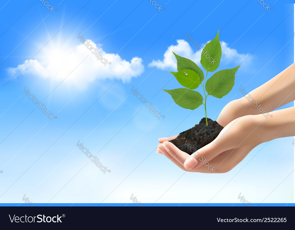Hands holding a young plant vector | Price: 1 Credit (USD $1)
