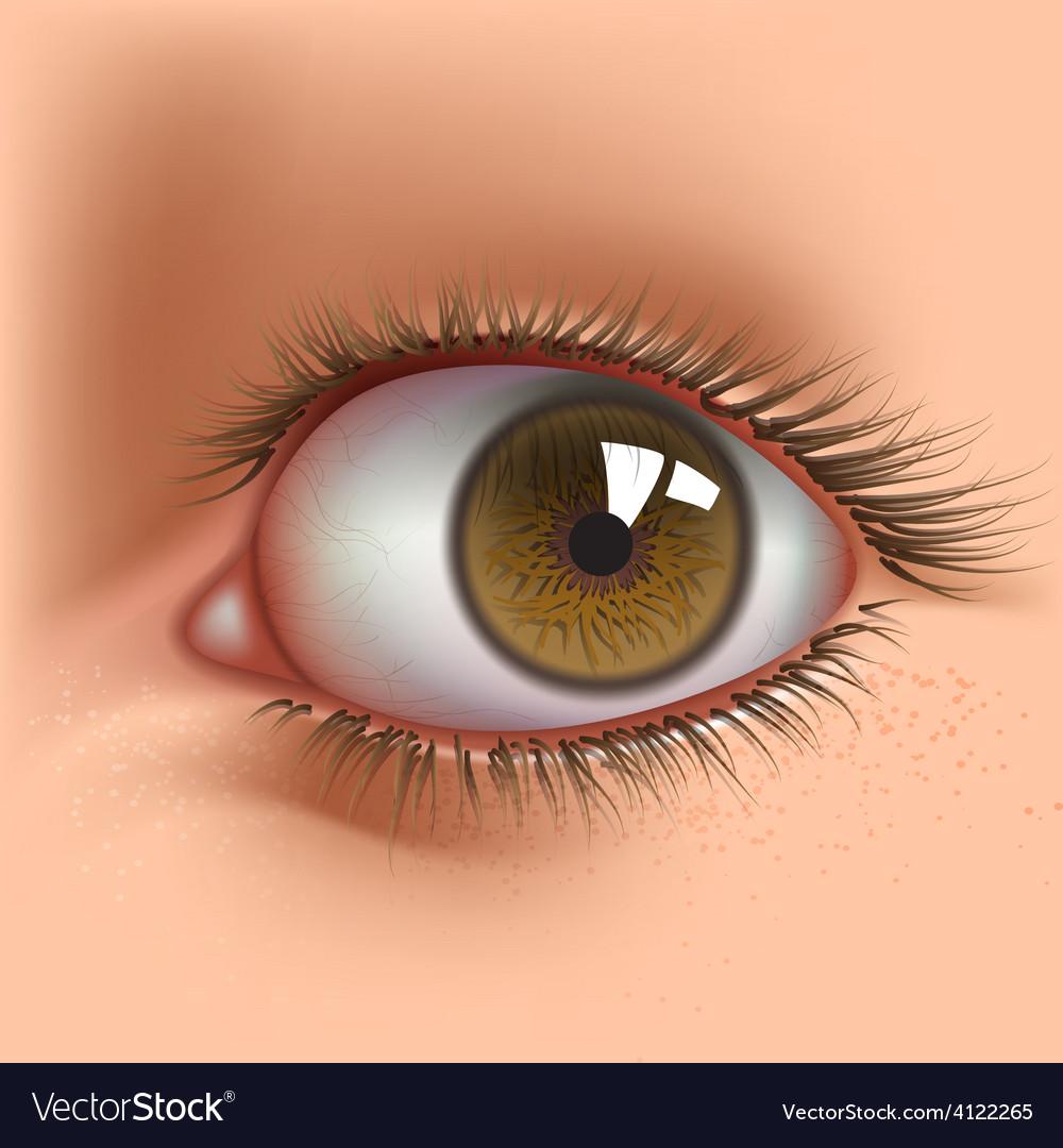 Open eye vector | Price: 3 Credit (USD $3)