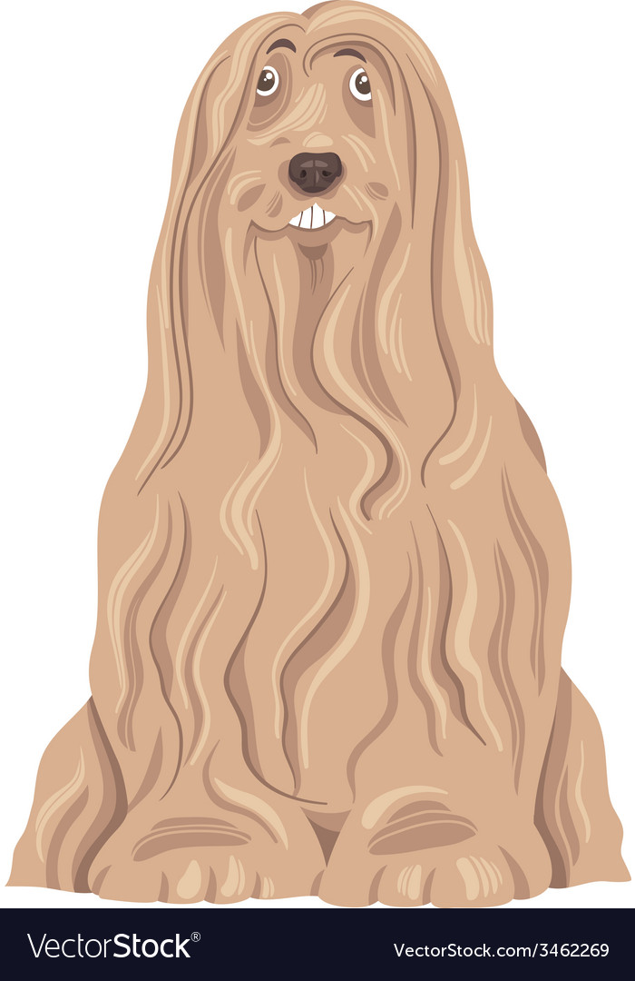 Bearded collie dog cartoon vector | Price: 1 Credit (USD $1)