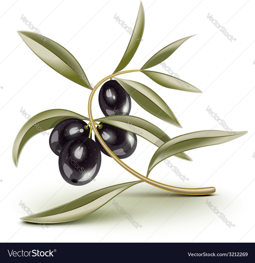 Olive branch black vector | Price: 1 Credit (USD $1)