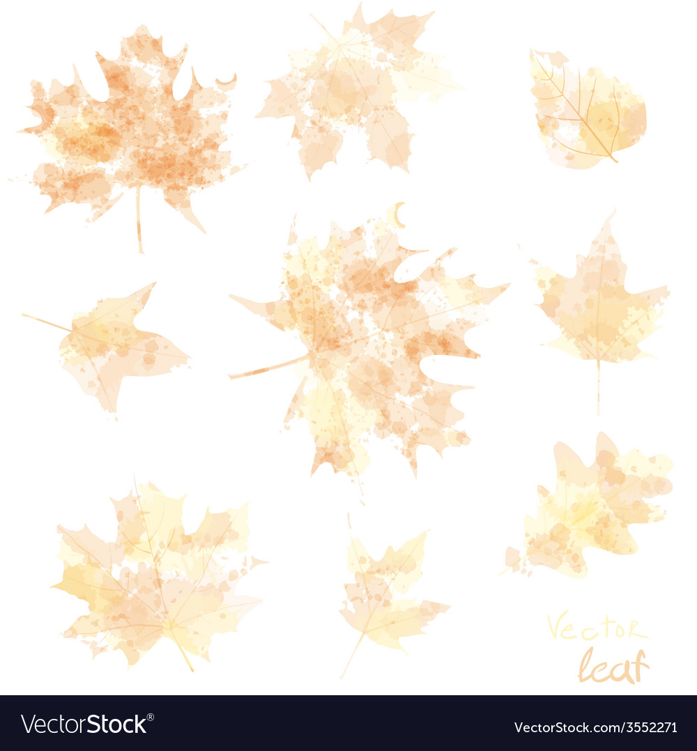 Watercolor autumn leaves maple leaf flora vector | Price: 1 Credit (USD $1)