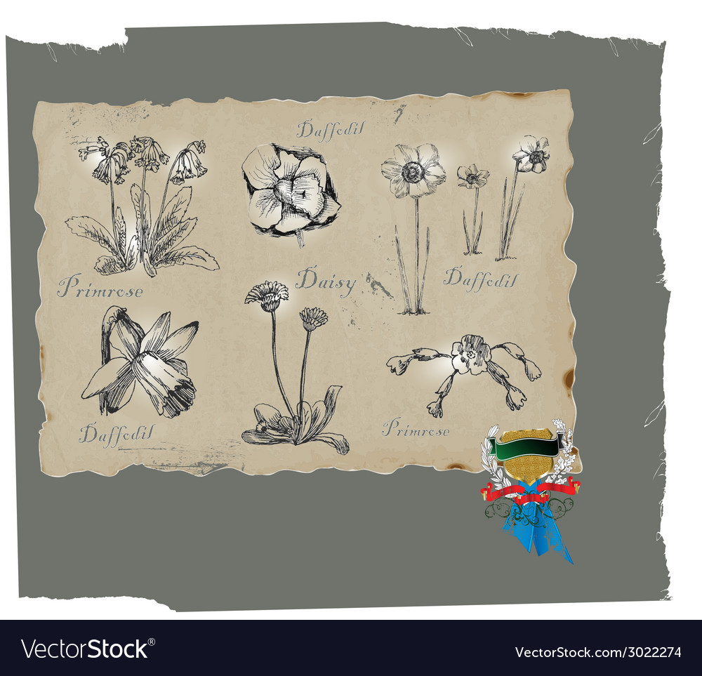 Flowers and blossoms vector | Price: 1 Credit (USD $1)