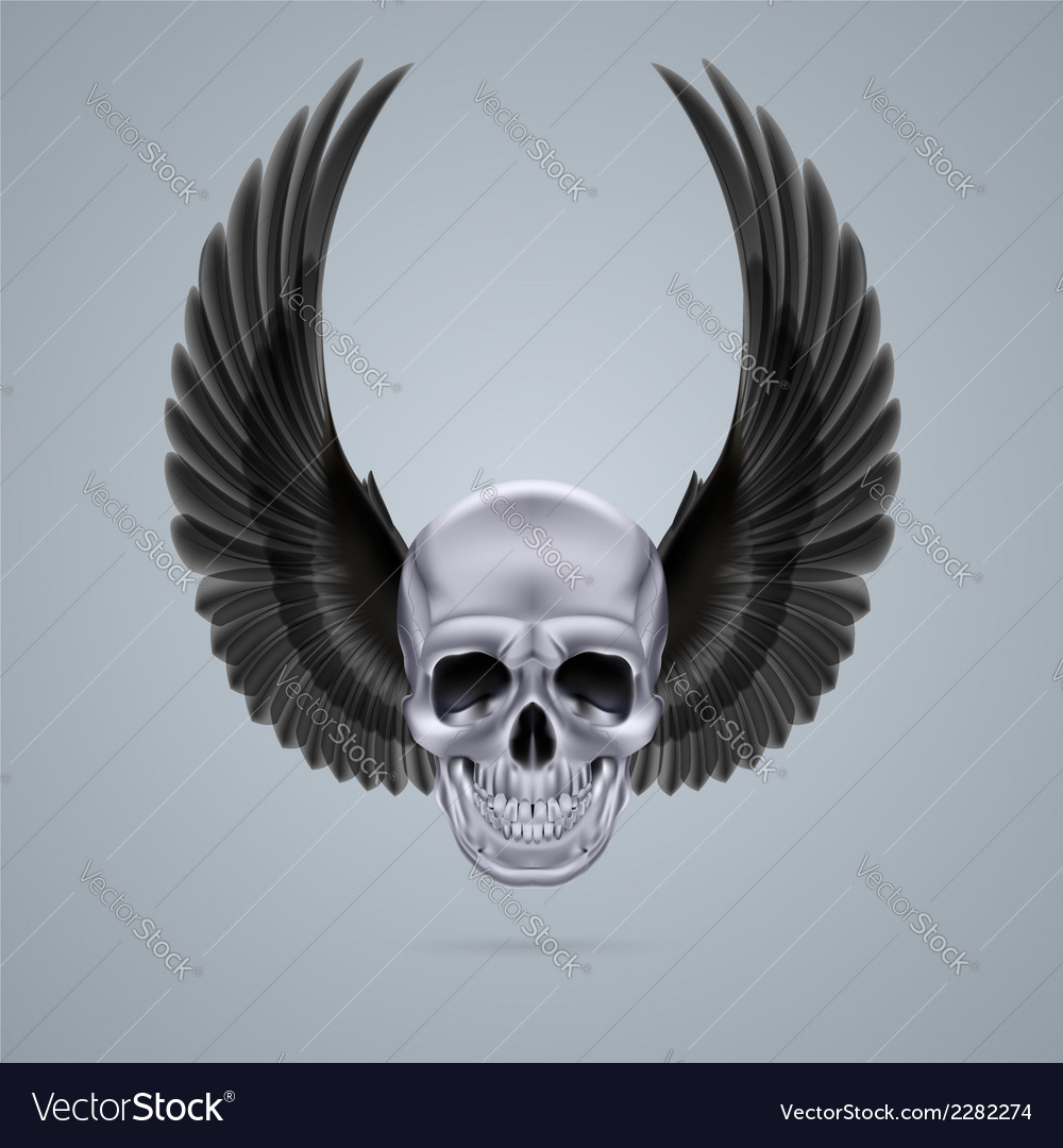 Metal chrome skull with two wings up vector | Price: 1 Credit (USD $1)