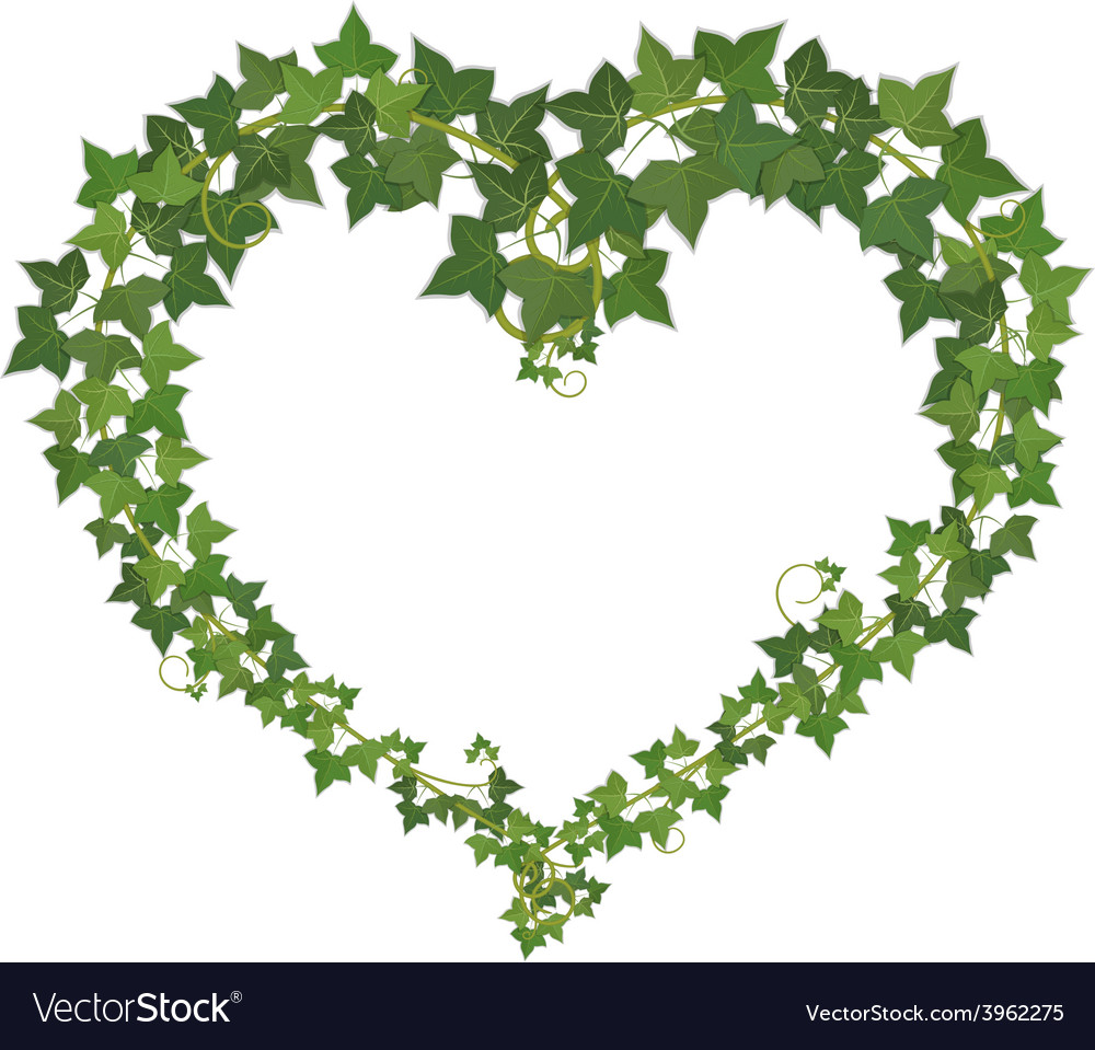 Ivy heart vector | Price: 1 Credit (USD $1)