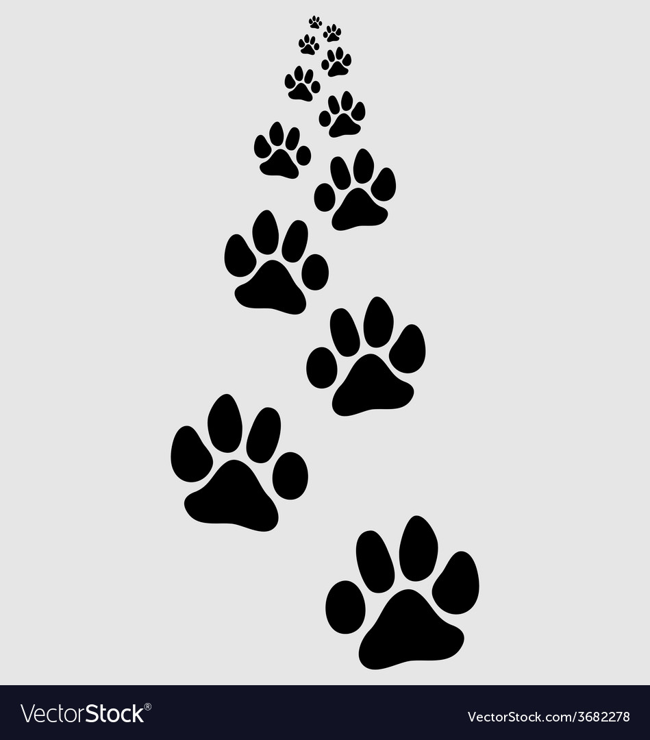 Footsteps of cat vector   Price: 1 Credit (USD $1)