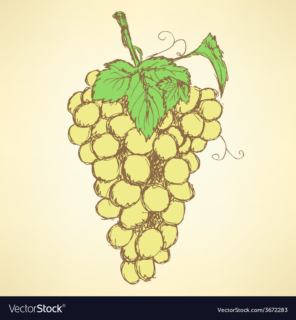 Sketch grape with leaves in vintage style vector | Price: 1 Credit (USD $1)