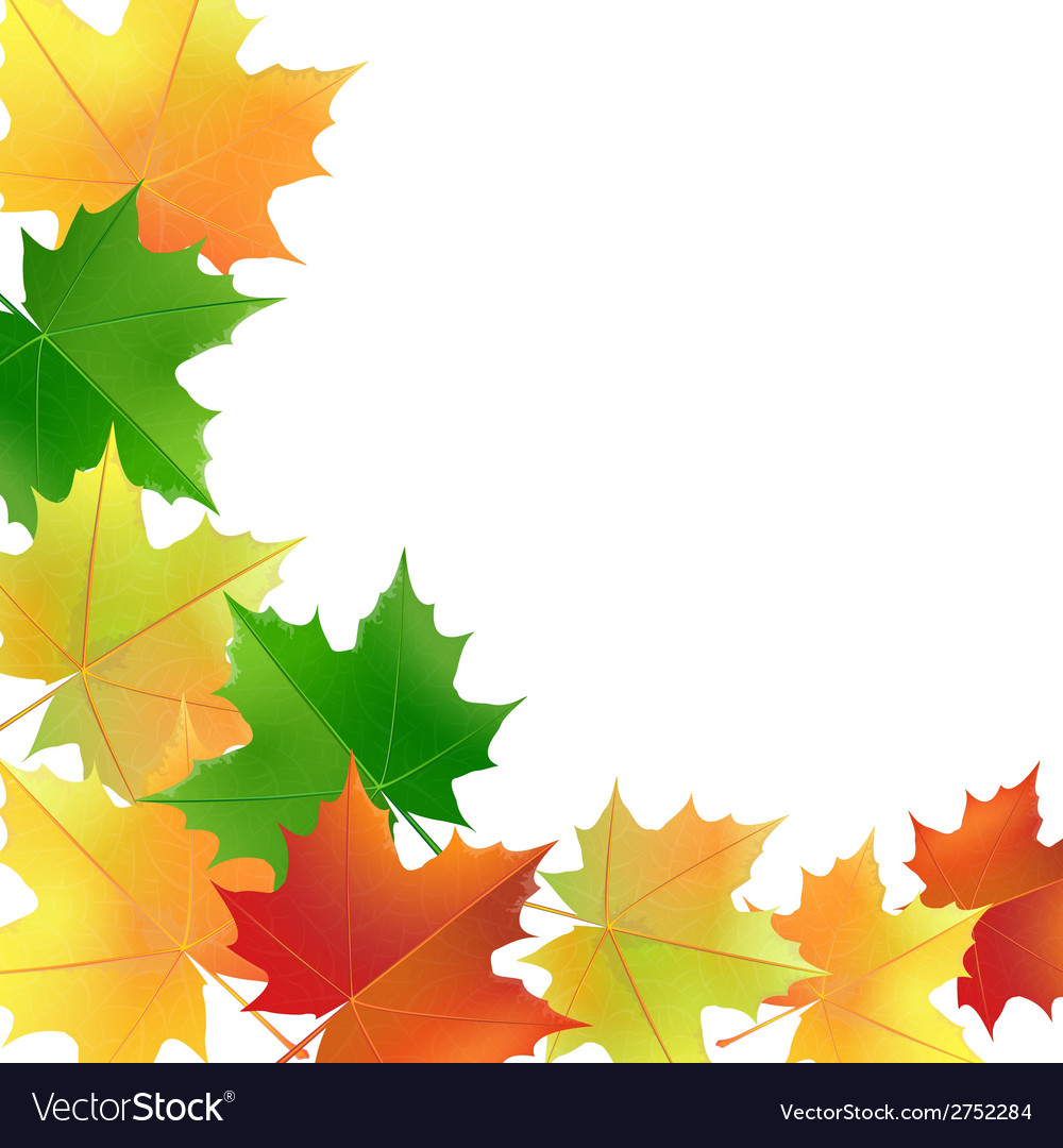 Autumn leaves on the white background vector | Price: 1 Credit (USD $1)