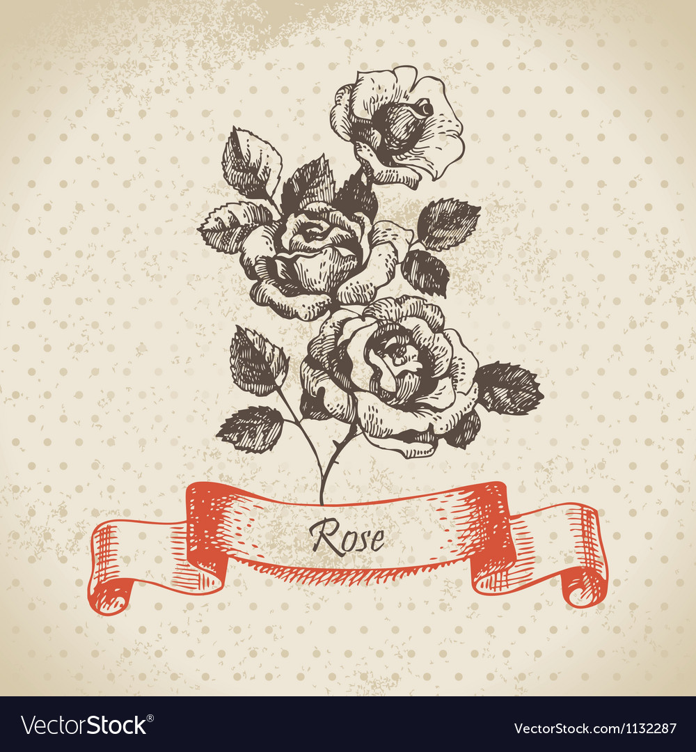 Rose hand drawn vintage design vector | Price: 1 Credit (USD $1)