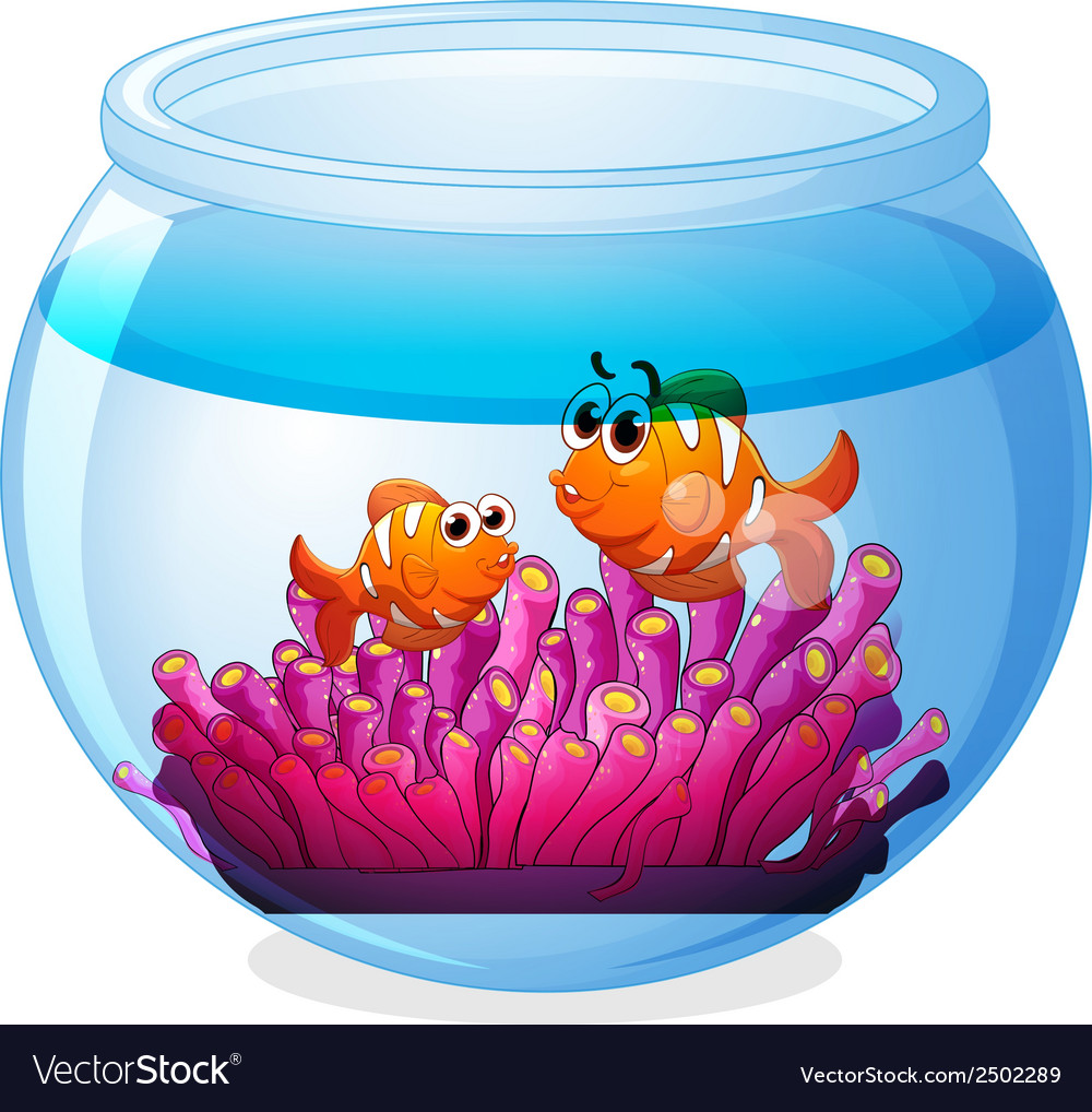 An aquarium with two orange fishes vector | Price: 1 Credit (USD $1)