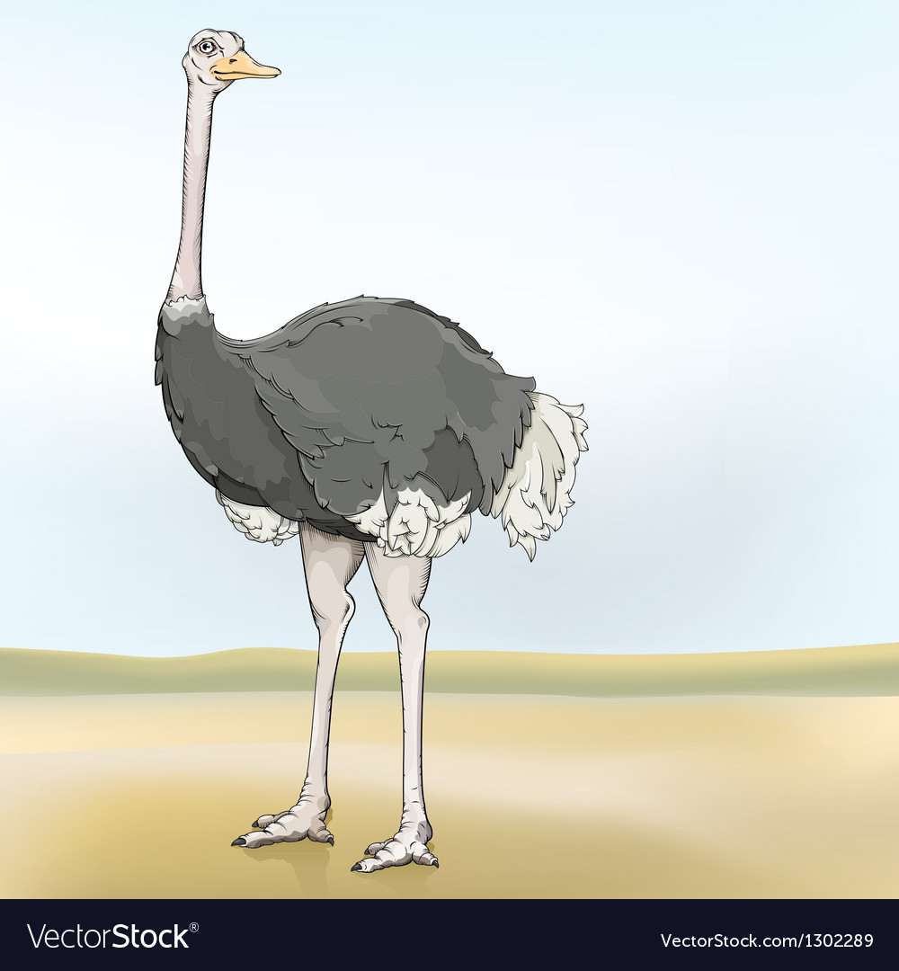 Ostrich vector | Price: 1 Credit (USD $1)