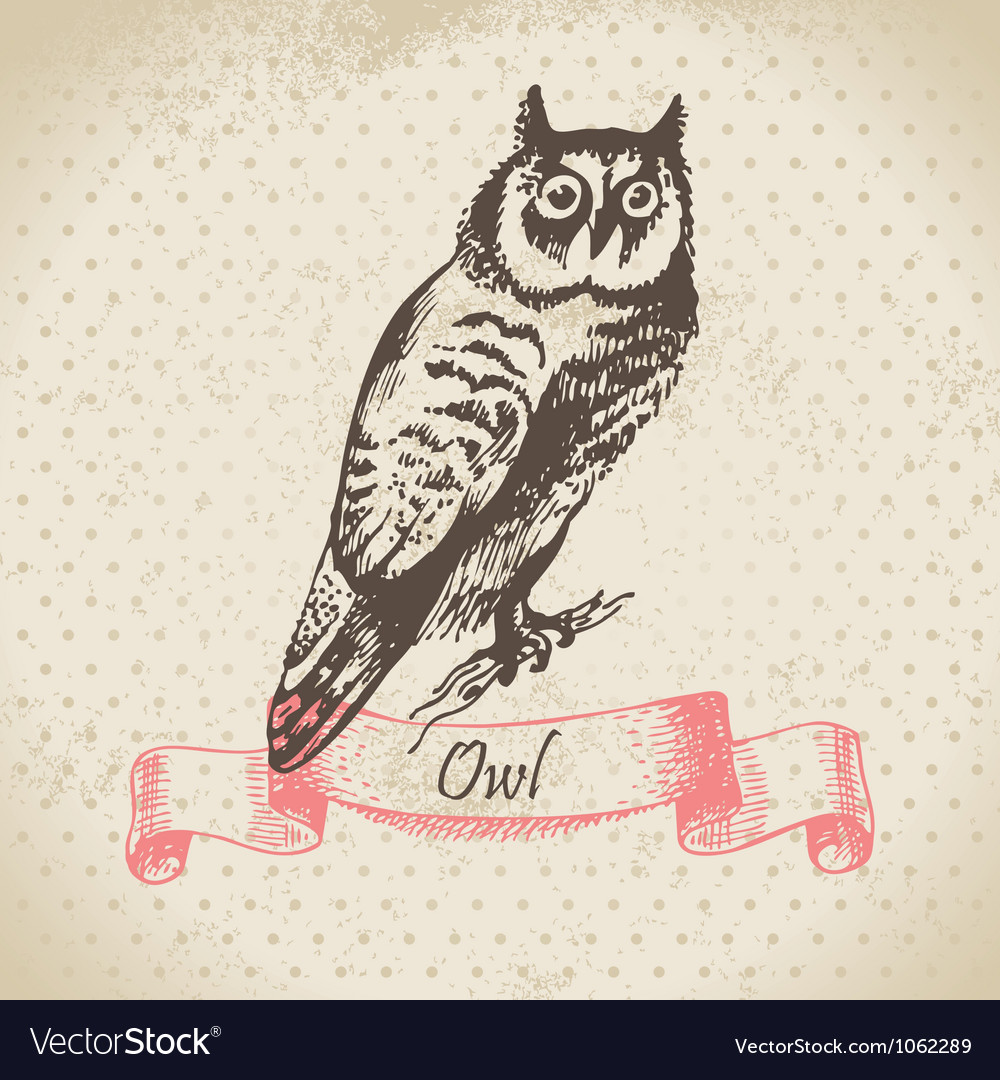 Owl bird hand-drawn vector | Price: 1 Credit (USD $1)