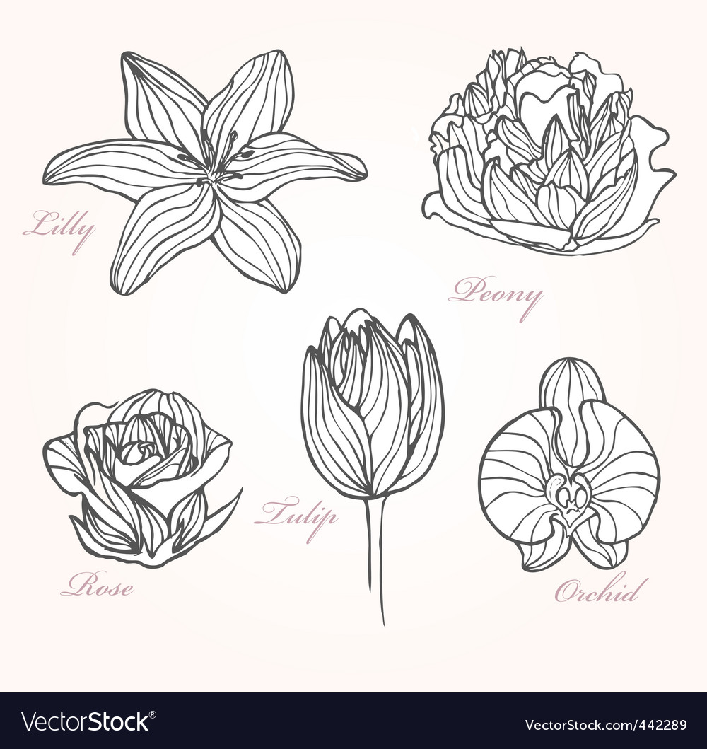 Set of flowers vector | Price: 1 Credit (USD $1)